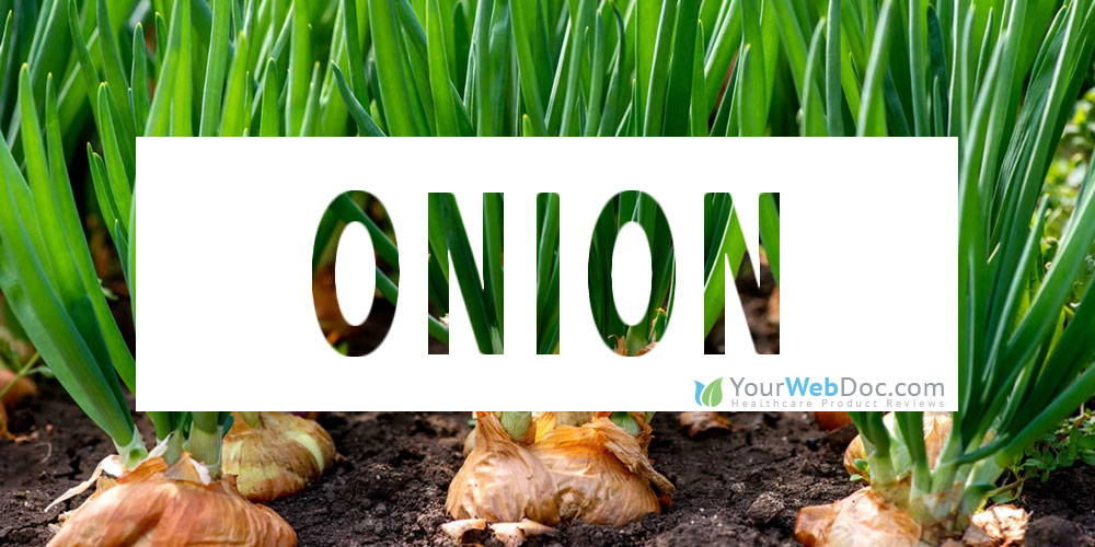 Onion To Improve Erectile Function